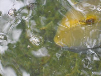 grouper fish up close